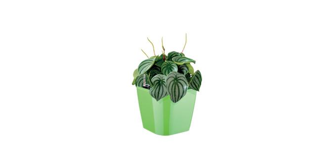 TESCOMA samozavlažovací květináč SENSE, zelená
