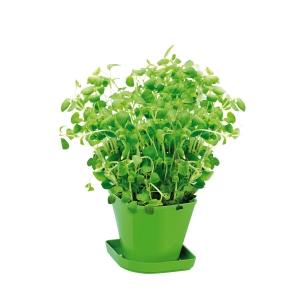 Conjunto p/ cultivar ervas aromáticas SENSE, oregãos