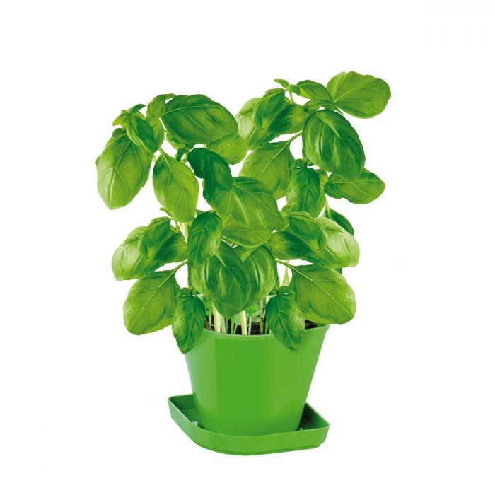 Conjunto p/ cultivar ervas aromáticas SENSE, manjericão