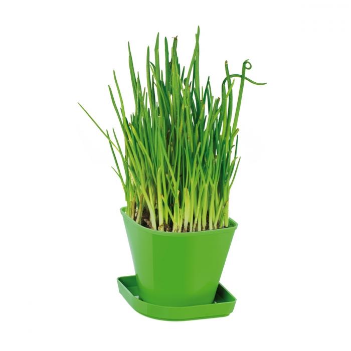 Conjunto p/ cultivar ervas aromáticas SENSE, cebolinho
