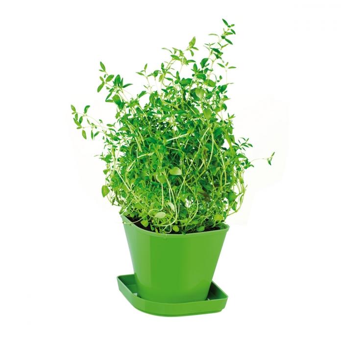Conjunto p/ cultivar ervas aromáticas SENSE, tomilho