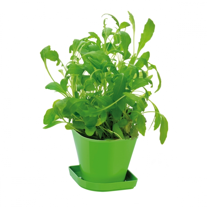 Conj. p/ cultivar ervas aromáticas SENSE, rúcula