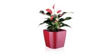 Samozavlažovací kvetináč SENSE