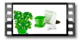 Súprava na pestovanie bylinek SENSE, bazalka